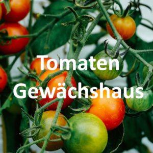TomatenGewächshaus